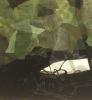 Grønn natt I 50 x 50 cm