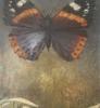 Sommerfuglene Admiral 90 x 130 cm