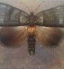 Sommerfuglene Nattsvermer 120 x 100 cm