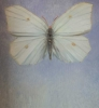 Sommerfuglene Sitronsommerfuglene 100 x 120 cm