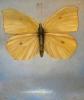 Sommerfugl (lys), ca 100 x 130 cm