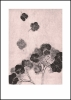 Hortensia blush Ed200