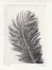 Feather 9 XL Monotypi