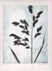 Pernille Folcarelli - Grass 2 Monotypi 30 x 40 cm