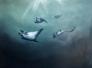 Sting rays 160 x 120 cm