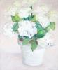 CRH Hortensia 80 x 100