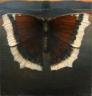 Sommerfugl, ca 100 130 cm