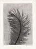 Feather 8 XL Monotypi