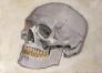 Studie av hodeskalle 15 x 21 cm
